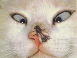 Cat is shocked with a bee on its nose