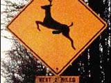 Warning: Deer Road Sign